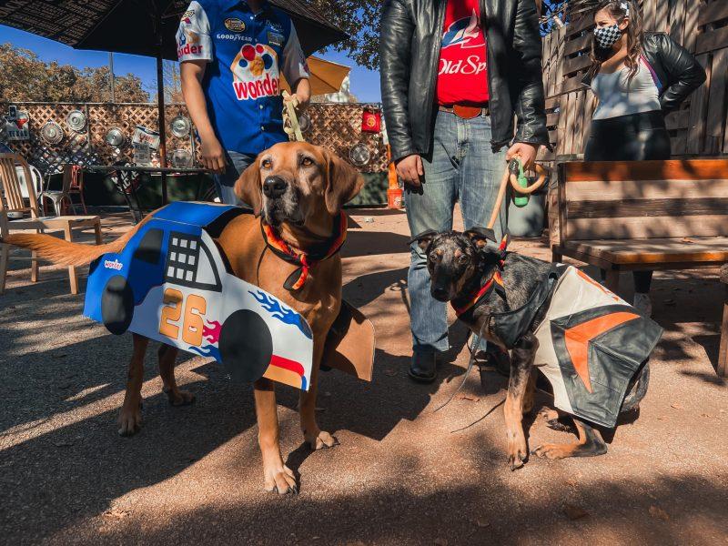 Nascar Couple + Dog Costume