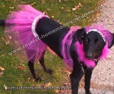 Dog Halloween Costumes